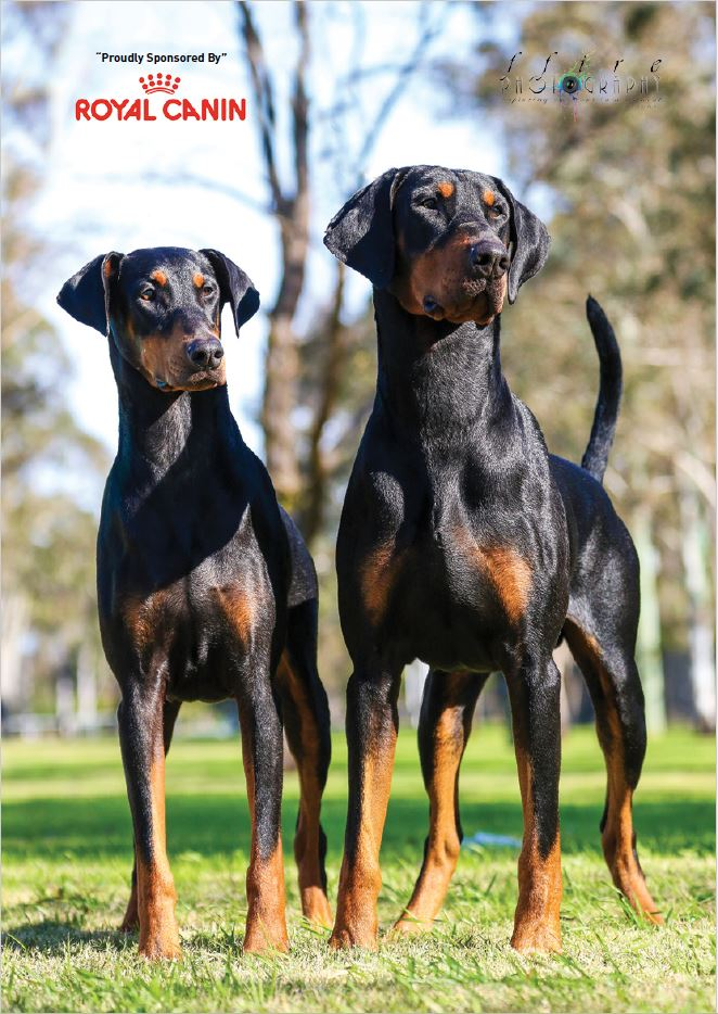 Dog Breeds of Australia - 2015 Breed Directory Volume 2 - Bravadobe Page 2